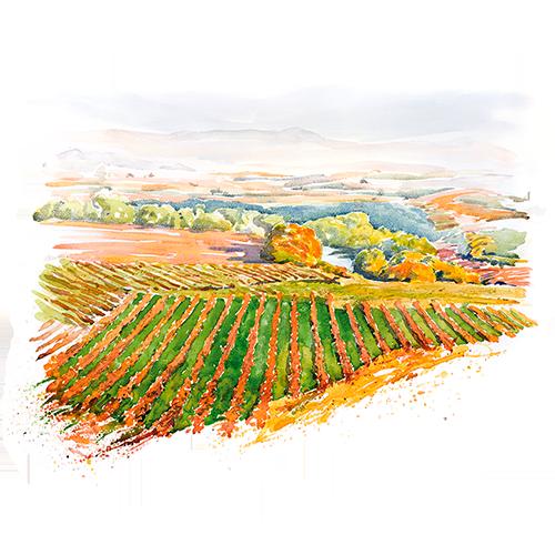 vinos-bg_acuarela-Horizontal-RIoja