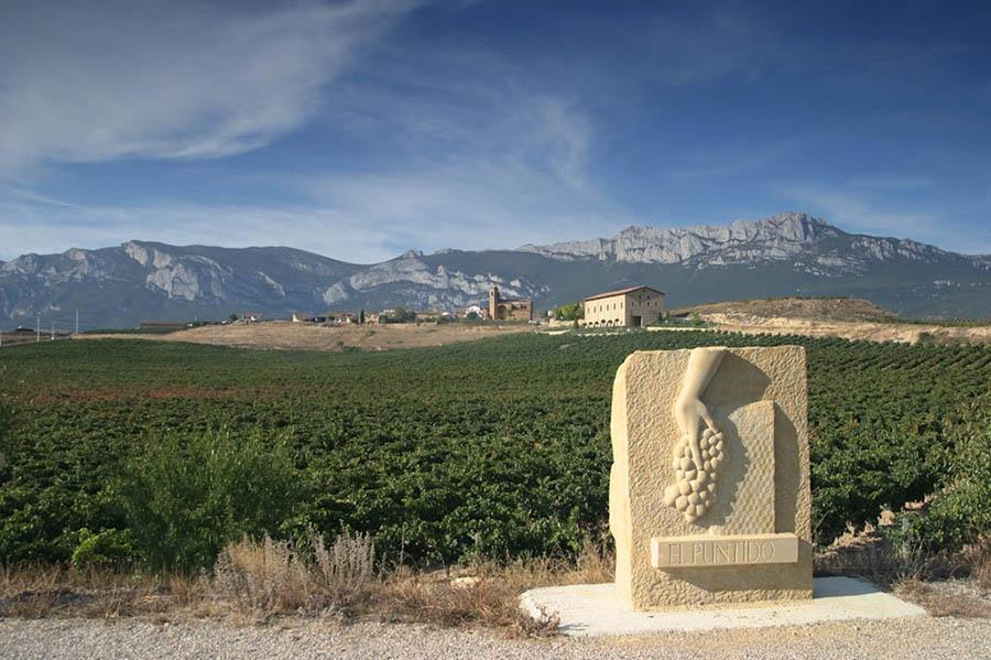 El Puntido vineyard-Vinedos_de_Paganos-Sierra_Cantabria