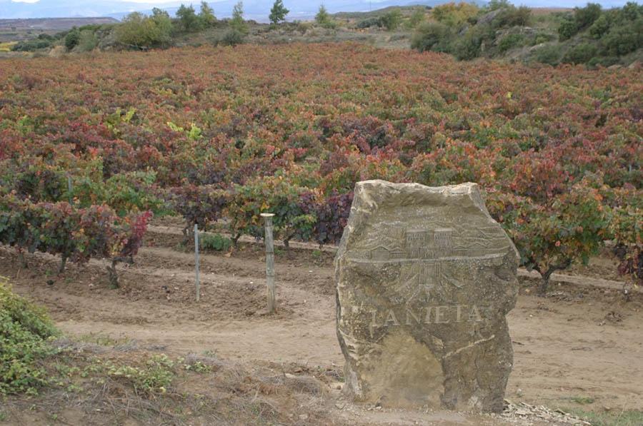 La Nieta alta13-Vinedos_de_Paganos-Sierra_Cantabria